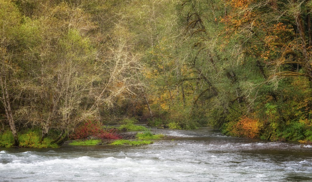 Autumn Along the Banks of the McKenzie River